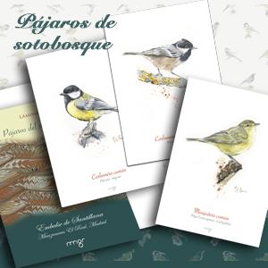 Pájaros de sotobosque